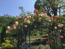 お花3.jpg